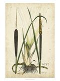 Antique Cattail I