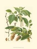 Pinecones & Foliage I