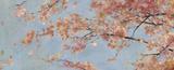 Osaka Blossoms I