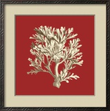 Coral on Red IV