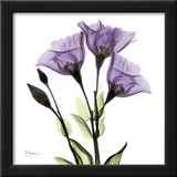 Gentian in Purple