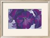 Petunias  c1925