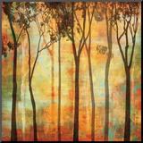Magical Forest I Reproduction montée par Chris Donovan