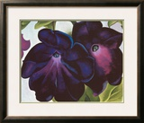 Black and Purple Petunia  1925