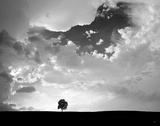 Lone Tree