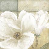 White Magnolia II
