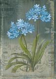 Black Botanical II