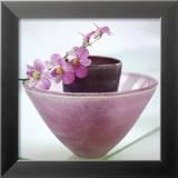 Orchidées Reproduction encadrée par H. Orth