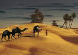 Palmeraie Dans le Sud Tunisien