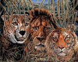 African Wildlife (Big Cats)