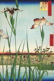 Irises at Horikiri