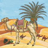 Arabian VII