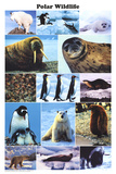 Laminated Polar Wildlife Educational Animal Chart Poster
