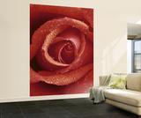 Papier peint Rose Rouge Papier peint