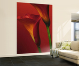 Red Calla Lilies Wall Mural