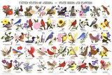 Laminated State Birds and Flowers Educational Chart Poster