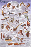 Laminated Pterosaurs Educational Dinosaur Science Chart Poster