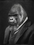 Mario Gorillini (le gorille) Giclée premium par Grand Ole Bestiary