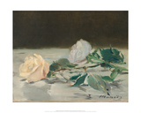 Two Roses on a Tablecloth  1882-83