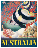 Australia  Great Barrier Reef c1956