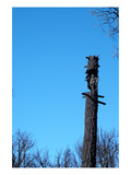 Tree Trunk Burned