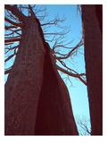 Burned Trees 6