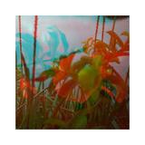 Vegetaux 19  2012