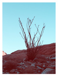 Desert Plant