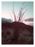 Desert Plants And Sunset