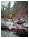 Sierra Nevada Forest 1
