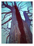 Burned Trees 8