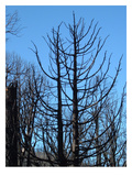 Burned Trees 2