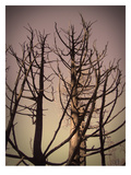Burned Trees 3