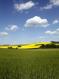 Agricultural Landscape at Saargau Near Kirf  Rhineland-Palatinate  Germany  Europe