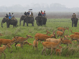 Tourists Atop Elephants Trek Through Kaziranga National Park