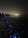 A Volcanic Beach Off Toyama Bay Glows Blue With Firefly Squid