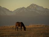A Horse Grazing Near Peaks in the Barguzin Valley Near Lake Baikal
