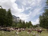 Courmayeur  Mont Blanc  Val Ferret  Aosta Valley  Italy  Europe