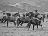 A Cowboy Herding Cattle in Field Papier Photo par Robbie George