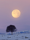 A Full Moon Rising over a Single Tree on a Snowy Hill
