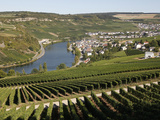 Vineyards and Village of Machtum  Mosel Valley  Luxembourg  Europe