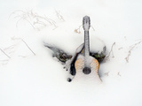 An Old Guitar and a Mandolin Blanketed in Fresh Snow