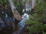 A Cypress Tree Grows in Reflective Water of the Loxahatchee River
