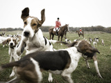 A Hound Jumps over Another Hound with Riders in the Background