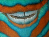 The Clownish Grin of a Bridled Parrotfish