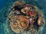Hard Corals Vie for Space and Energy-Giving Sunlight Off Cairns Papier Photo par David Doubilet