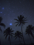 Palm Trees on a Beach Silhouetted Against a Starry Sky