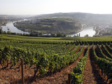 River Mosel and Vineyards Near Grevenmacher  Mosel Valley  Luxembourg  Europe