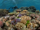 A Marine Scientist Admires a Garden of Stony Corals