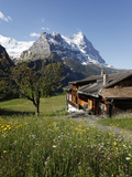 View from Grindelwald to Eiger  Bernese Oberland  Swiss Alps  Switzerland  Europe